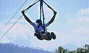 Flying Fox in Jim corbett