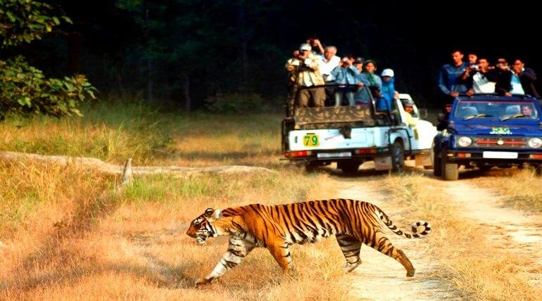 Jungle Safari An Ideal Way To Discover Wildlife