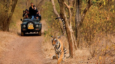 Wildlife Safari Packages India Jim Corbett