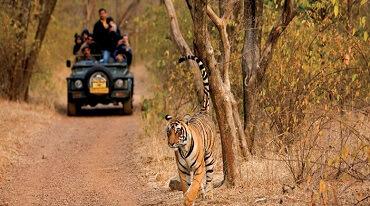 Wildlife Safari Packages India Jim Corbett