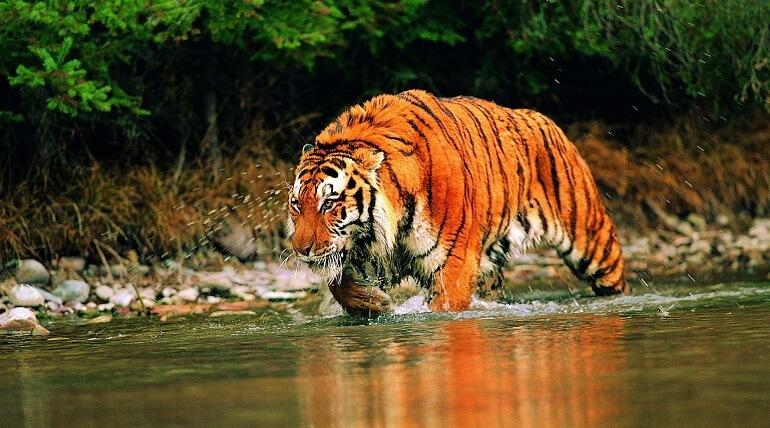 Corbett National Park Tour, Wildlife Tour India
