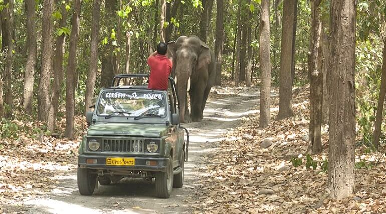 Ultimate Guide To Jungle Safari In Corbett