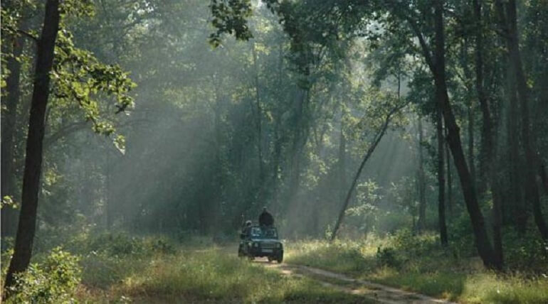 Visiting Jim Corbett National Park In Monsoon Season