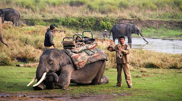 Jim Corbett National Park A Perfect Gateway For Travellers