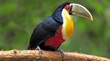 Bird Watching Tour In Corbett National Park