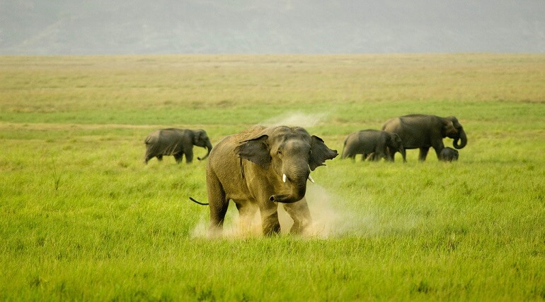 Best Time To Visit Jim Corbett