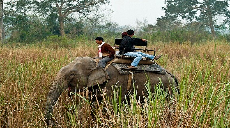 Elephant Safari At Jim Corbett National Park