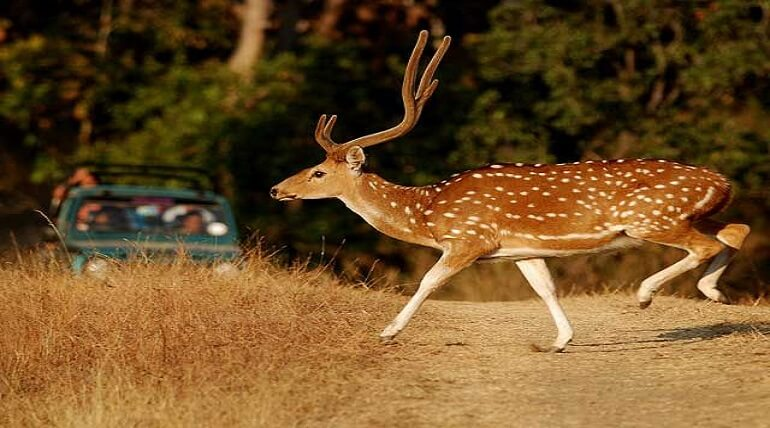 Worth Knowing Facts About Jim Corbett National Park