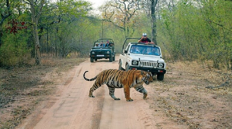 Jim Corbett National Park Safari Zones