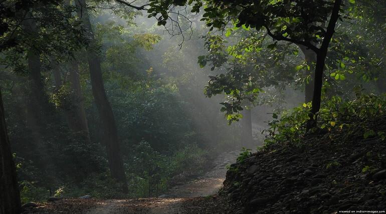 Best Season To Visit Corbett National Park