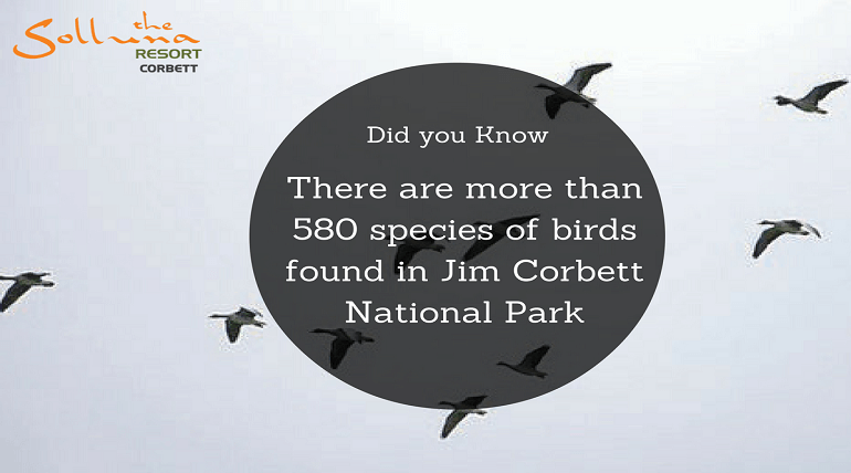 Worth Knowing Facts About Jim Corbett National Park!