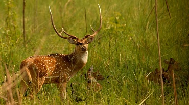 Experience An Incredible Wildlife Safari At Jim Corbett National Park