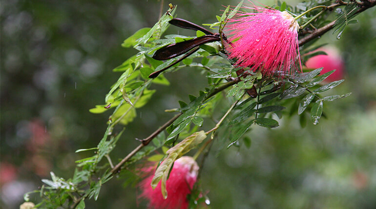 Let This Monsoon Refresh Your Soul With At Jungle Retreat At Jim Corbett National Park