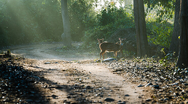 PLAN A WILDLIFE SAFARI IN JIM CORBETT NATIONAL PARK AT WEEKENDS: