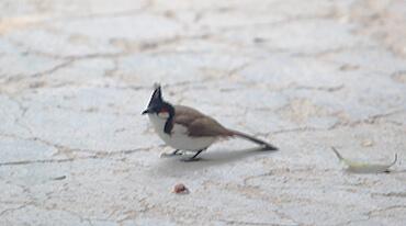 BIRD WATCHING THROUGH THE WILDERNESS OF JIM CORBETT NATIONAL PARK