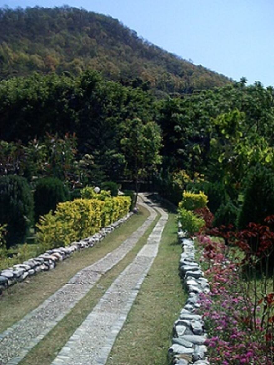 1470313224_vegetation-of-jim-corbett-national-park.jpg