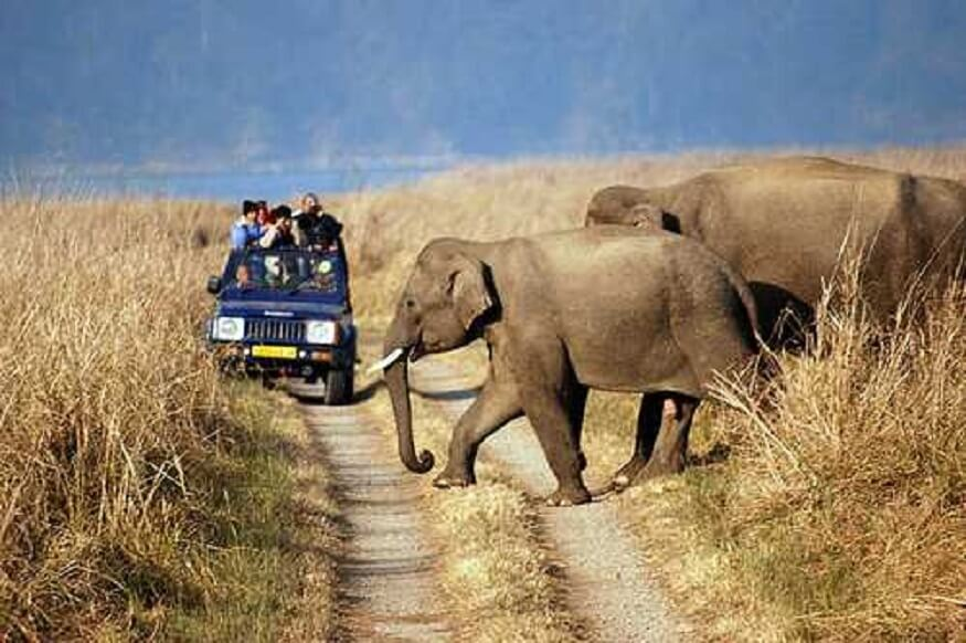 1470313561_Jungle-Safari-in-jim-corbett.jpg