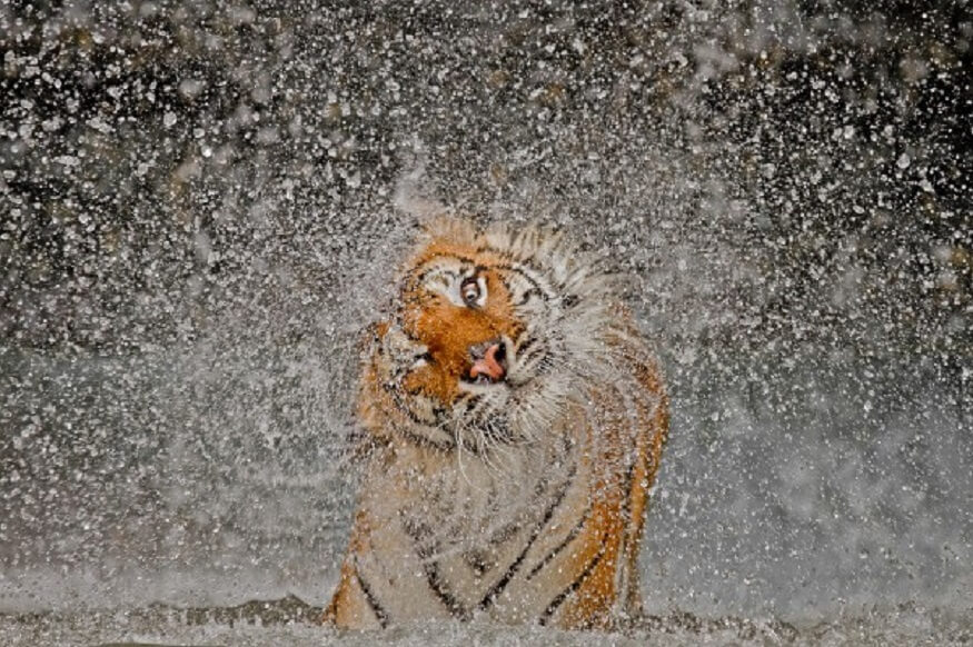 1470313627_jim-corbett-national-geographic.jpg
